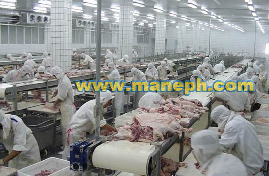 PORK SORTATION CONVEYOR